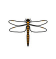 dragonfly logo symbol icon sign orange color vector image