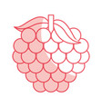 grapes fresh fruit isolated icon vector image vector image