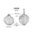 onion hand drawn set full and half cutout slice vector image vector image