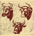 bull heads emblems on grunge background design vector image vector image