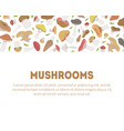 mushrooms banner template with different kinds of vector image