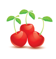 Ripe red cherry with leaves vector image