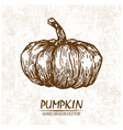 digital detailed pumpkin hand drawn vector image vector image