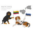 dogs by country of origin baltic dog breeds vector image