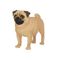 flat portrait of standing pug puppy home vector image