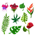 flat set of various exotic flowers and vector image