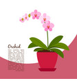 orchid indoor plant in pot banner vector image vector image