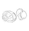 sketch of shells vector image