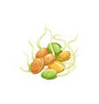 soybean sprouts isolated realistic soy legumes