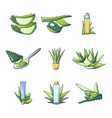 aloe vera icon set cartoon style vector image vector image