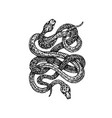 dotwork two snakes vector image