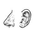 human nose ear sketch hand drawn vector image