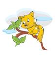 squirrel or sciuridae vector image
