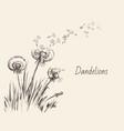 dandelions flying seeds dandelion hand drawn vector image