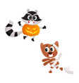 flat sraccoon wearing pumpkin mummy dog vector image vector image