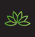 green lotus plant image vector image
