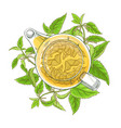 nettle tea vector image vector image