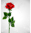 Straight Red Rose vector image vector image