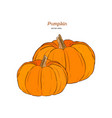 ector hand drawn set of pumpkin vector image