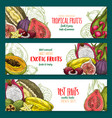 exotic fruit sketch banner set of tropical berry vector image vector image