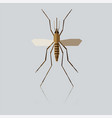 flat geometric mosquito vector image vector image