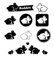 rabbit icon on white background vector image vector image