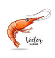 shrimp design isolated on white background vector image