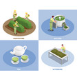 tea production isometric concept vector image vector image