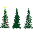 three spruce trees vector image vector image