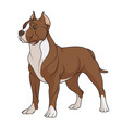 color a chocolate brown pit bull vector image