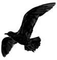 Gull flight bird and seabird Sea isolated on vector image vector image