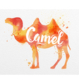 Painted animals camel vector image