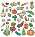 sketch vegetables hand drawn color vegetable vector image vector image