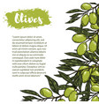 border with colorful olives the pattern with vector image