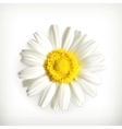Chamomile vector image vector image