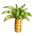 pineapple palm tropical tree color vector image vector image