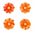 set isolated yellow gerbera or daisy vector image