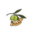 olive branch olive oil design elements for label vector image