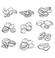 set of contour drawings of various types of nuts vector image vector image