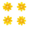 set of isolated yellow gerbera or daisy vector image vector image