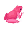 bright pink frog back view small toad with black vector image
