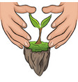hand hold green plant vector image vector image