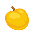 small fresh apricot vector image vector image