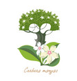 tropical plants with flowers cerbera mangas vector image