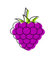 blackberry closeup icon dark purple berry logo vector image