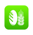 bread wheat icon green vector image