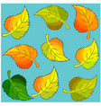 bright birch leaves on a blue background vector image vector image