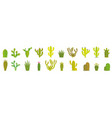 cactus set collection exotic plants vector image