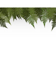colorful naturalistic frame from leaf palm vector image vector image