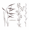 wildflowers set for design and decoration of vector image vector image